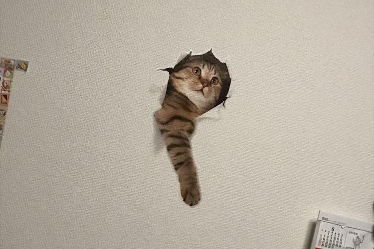 一瞬ビビるけど超かわいい!壁を突き破る猫ちゃんの壁紙シールが話題に
