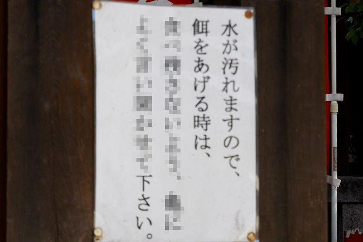 可愛くてちょっと笑える!亀さんの側に掲示された貼り紙の言葉がユニークすぎた