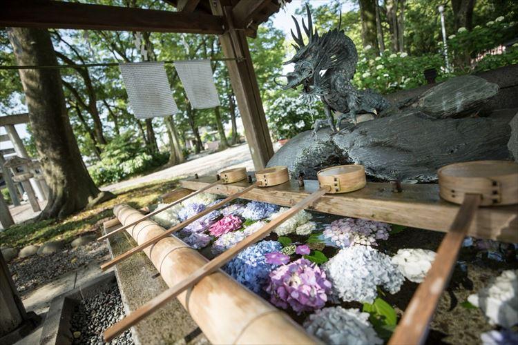 カラフルで涼しげ~!御裳神社の手水舎に浮かぶ紫陽花がめちゃくちゃキレイ
