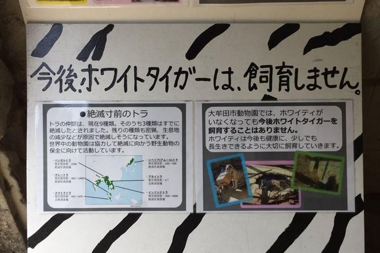 「今後、ホワイトタイガーは飼育しません」…大牟田市動物園の掲示板に書かれた内容に共感の声