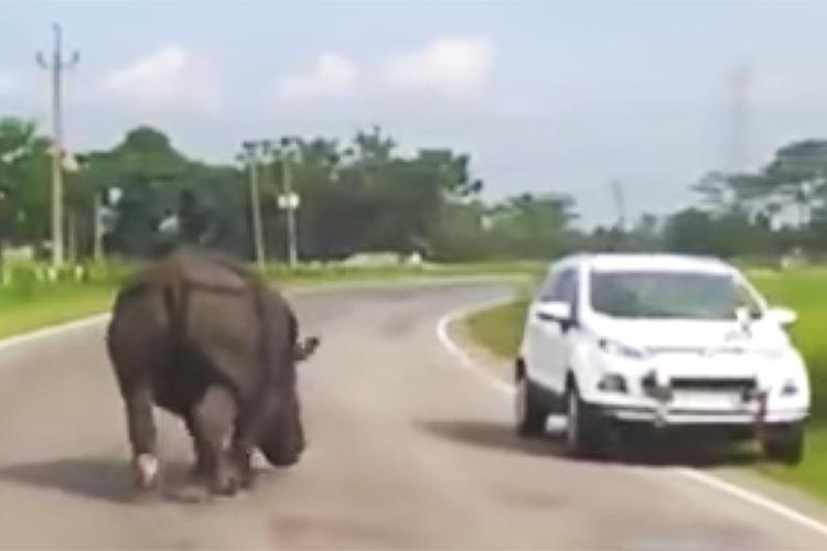 「そこ、どかんかい!」悠々自適に車道を闊歩するサイが車にサイキック!?