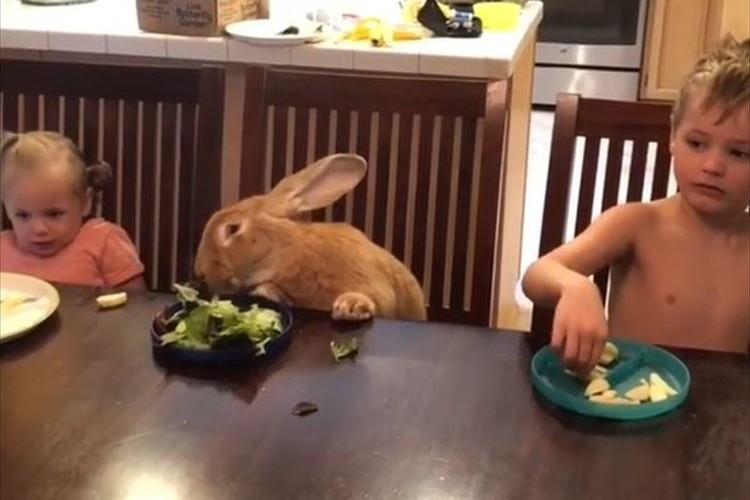 【動画】並外れた大きさの巨大ウサギとの暮らしが微笑ましい♪ いつでもどこでも一緒
