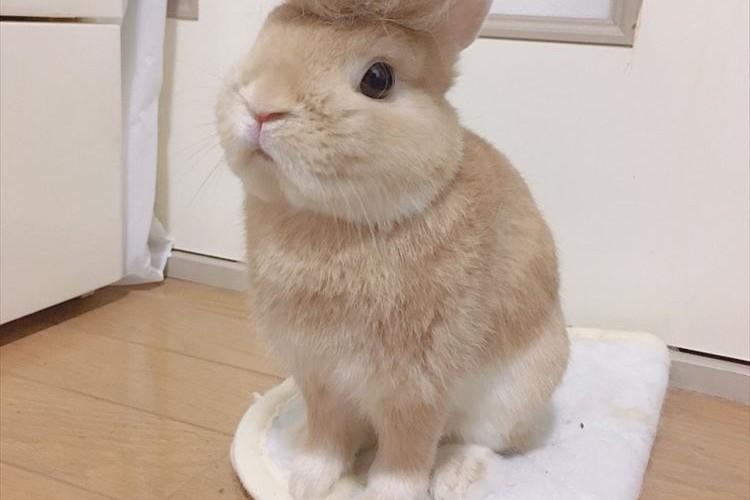 こっ、これはっ…!凄まじいイメチェンを敢行した男気あふれるウサギの姿が話題に!