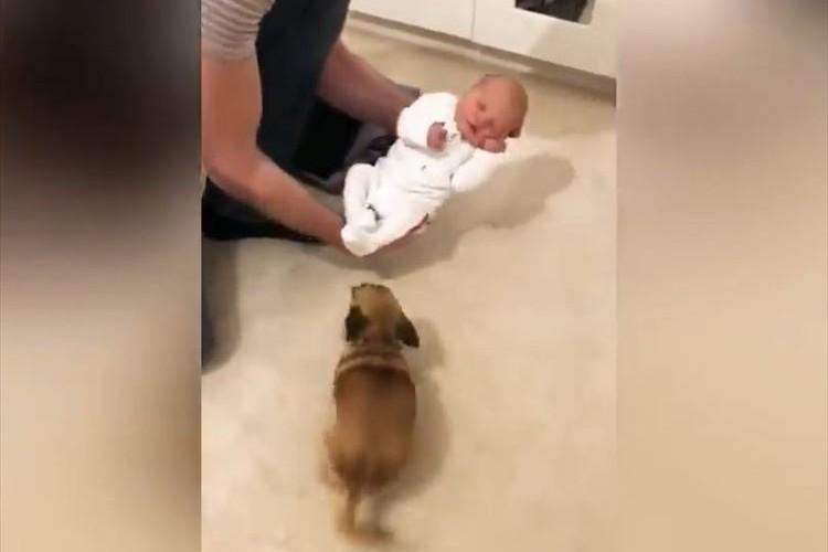 赤ちゃん誕生を心待ちにしていたワンコが赤ちゃんと対面!その時のアクションが微笑ましい♪