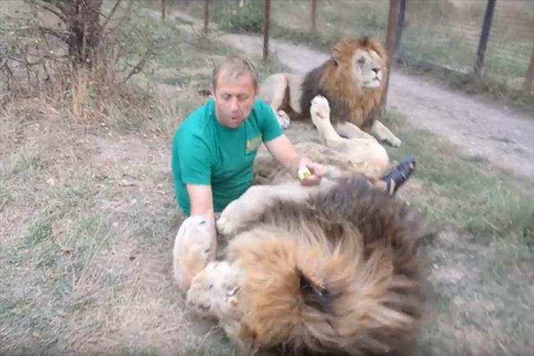 こんなに仲良くなれるのか…ライオンと抱き合ってキスしたり、じゃれあう男性が凄すぎる