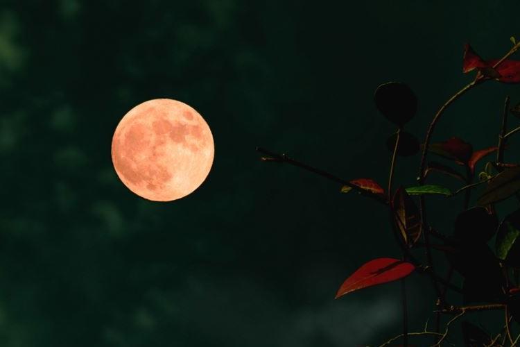 今年の『ストロベリームーン』は6月28日だぞー!赤みがかった満月を見よう!