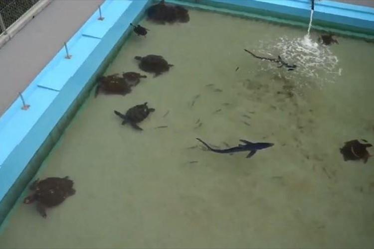 25メートルプールにサメが優雅に泳いでいる!廃校を利用した水族館がめっちゃ楽しそう
