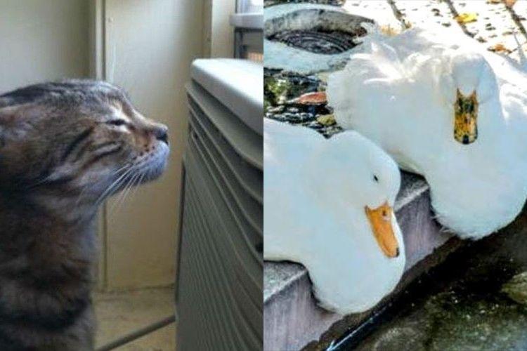 やっぱり暑さには誰も勝てない!?夏でバテバテな動物たちの写真【9選】