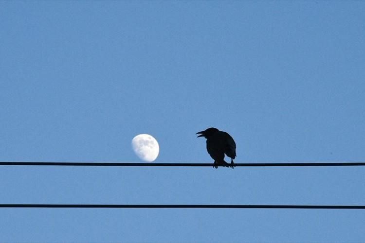 『384,400km離れた隣人』カラスとお月さまのコラボがめっちゃ素敵