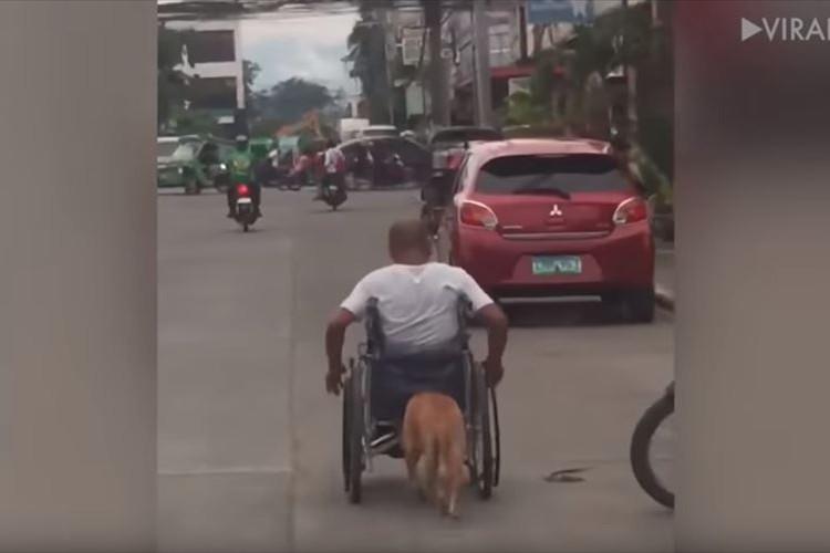 半身不随になった飼い主の車椅子を押す愛犬、その深い絆にほっこり