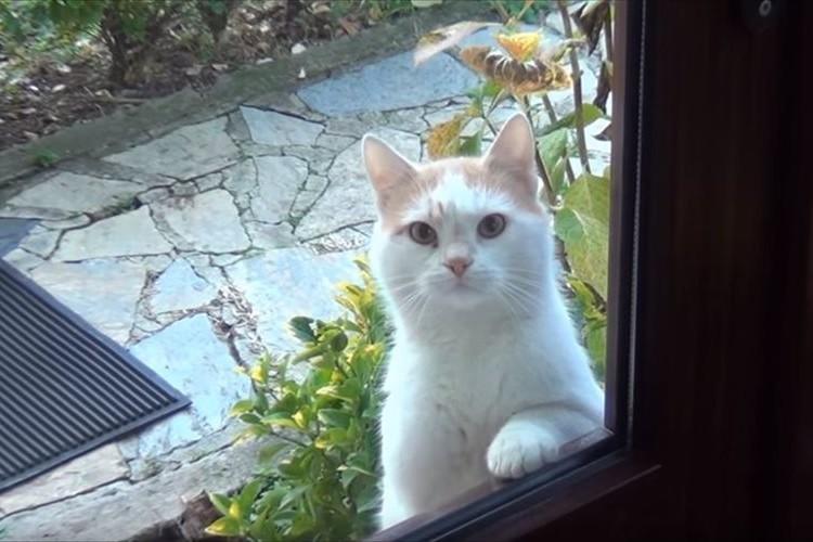 お腹が空くと、窓越しにアピールをしに来るニャンコ…その目力が毎回ハンパない!