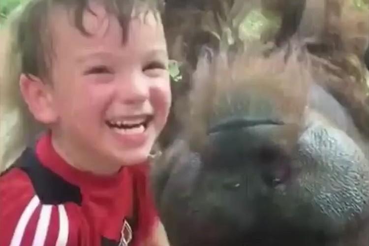 少年とガラス越しにキスを繰り返す、めちゃめちゃ笑顔のオランウータンが話題に!