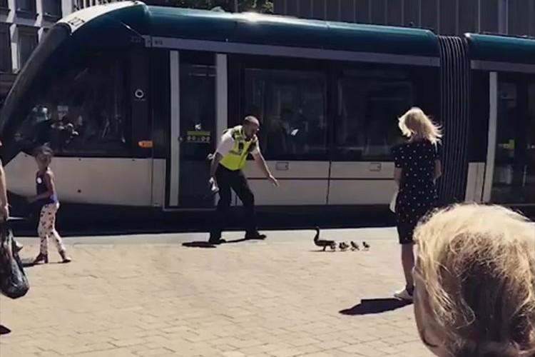 【動画】アヒルの家族が道路を渡れるように、誘導する警察官が微笑ましい