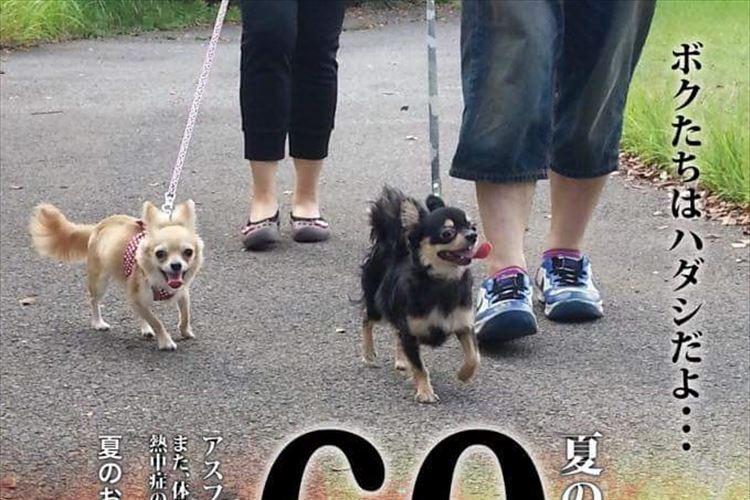「ボクたちはハダシだよ…」炎天下で散歩する愛犬たちのために作られたポスターが話題に