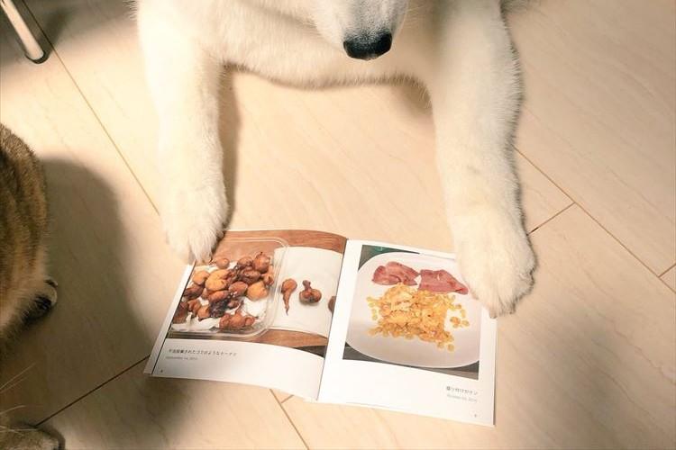 飼い主さんが作った失敗手料理本を見つめるワンコ、その何とも言えない表情に爆笑