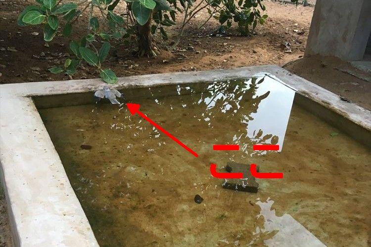 ん?なんか水の上で鳥が浮いているぞ…!?よーく見たらまさかの「ハト」だった!