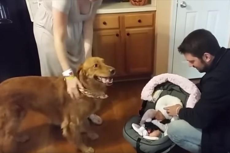 生まれたばかりの赤ちゃんが我が家に!新しい家族を大喜びで歓迎するワンコ