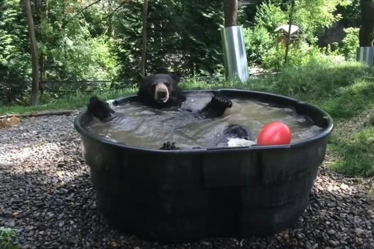 イィィヤッホーーーーイ!水風呂でめちゃめちゃ気持ち良さそうなクマが微笑ましい♪