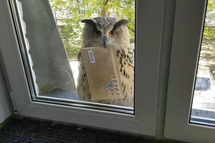 【動画】なんて可愛らしい郵便屋さん♪ 手紙を届けてくれるフクロウが微笑ましい