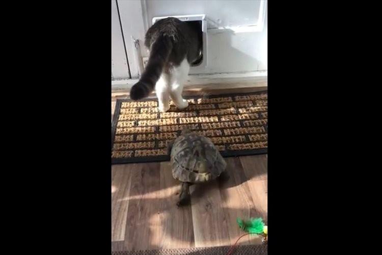 お~い、待ってくれ~!大好きなニャンコを追って不可能を可能にしたカメが凄い!
