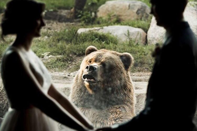 動物園で愛を誓い合うふたり、それを見つめるクマさんのリアクションがおもろカワイイ