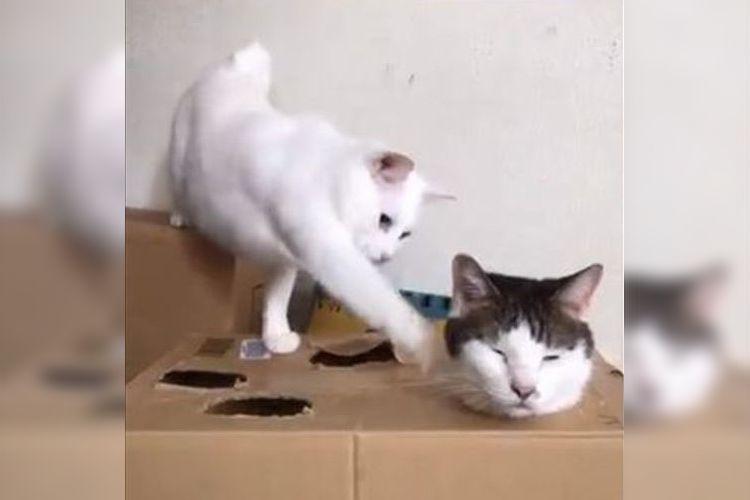 余裕なのか鈍いのか!?シュールでユルすぎる猫ちゃんの「モグラたたき」が可愛すぎ