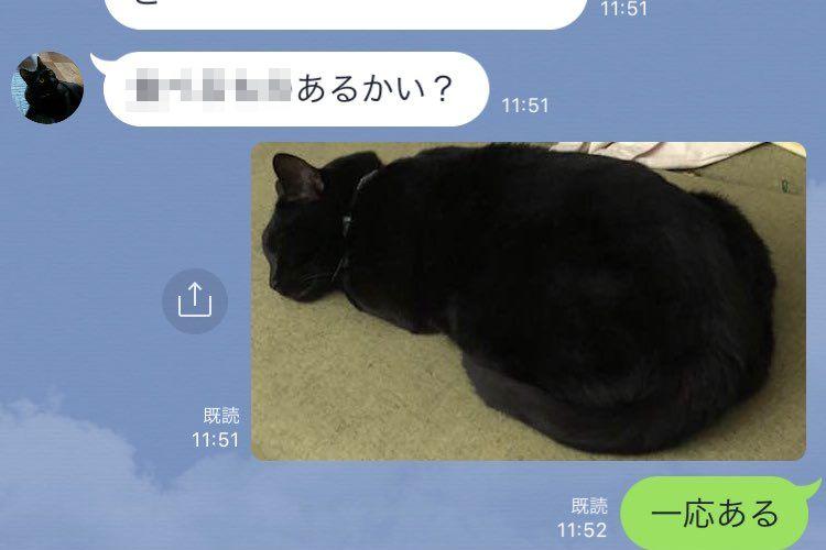 猫の写真を送るタイミングを誤って…思わぬ物騒な会話になったLINEに爆笑