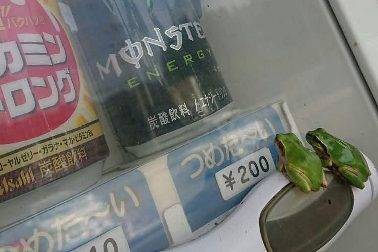「おごってあげた方がいいのかな?」2匹のカエルが熱視線を送るその先には…