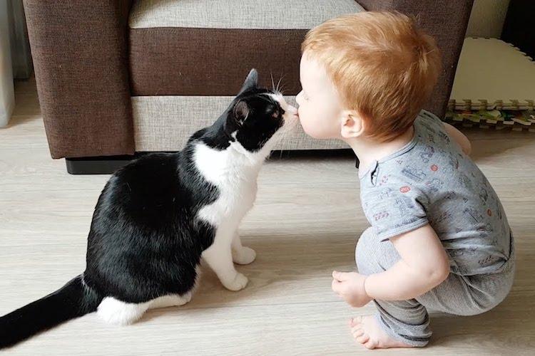 赤ちゃんが猫にキスして大はしゃぎ!みんなハッピーになれる可愛すぎる動画