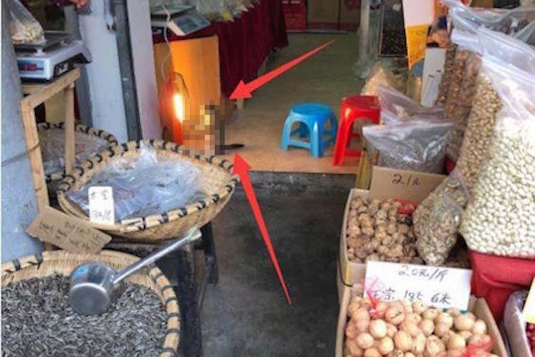 まるで人間みたい!中国の食料品店で撮られた猫の写真がなんだかメルヘンで癒される