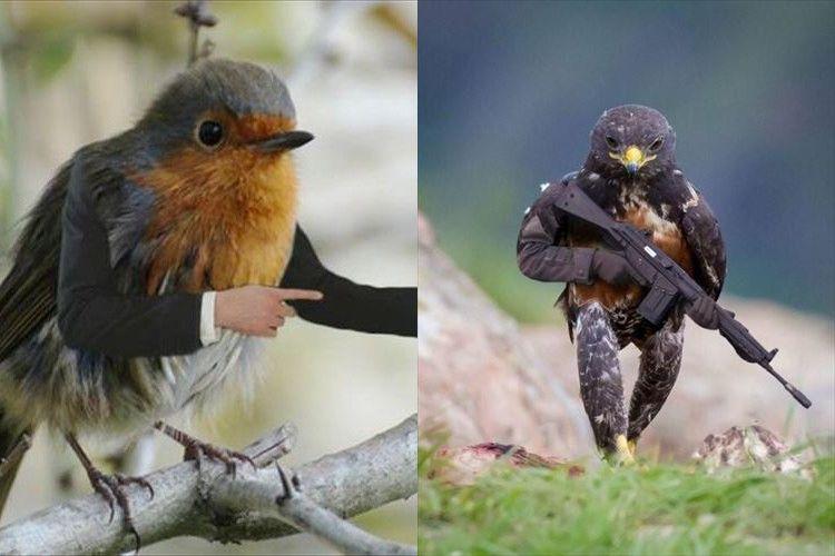 地味にマッチしてるし!鳥さんたちに腕をつけるコラ画像が海外で流行ってるらしい