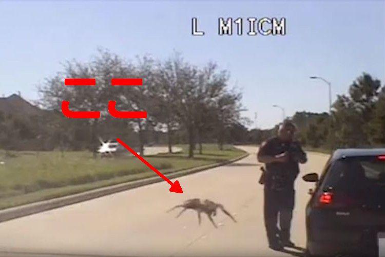 【動画】巨大化したクモが出現!?背後から迫られる警察官の反応は…?
