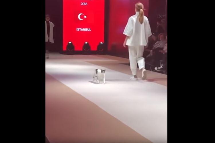 これぞ本当のキャットウォーク!ファッションショーに侵入してきた猫ちゃんが可愛すぎ