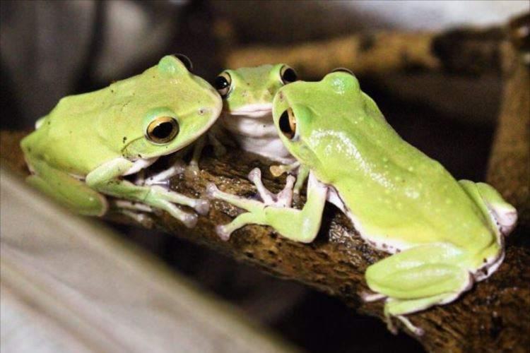 混ざりたい…3匹のカエルが井戸端会議をしているかの様でカワユイ♡