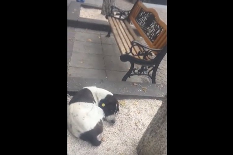 「会いたかったワン!」行方不明になっていた愛犬と飼い主が3年ぶりの再会