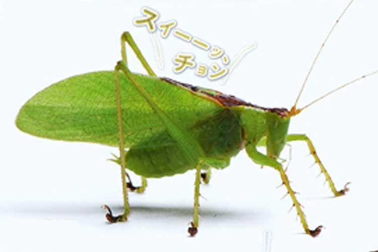 「鳴く虫75種の声がわかる図鑑」が登場!まるで草むらで佇んでいるような気持ちになる