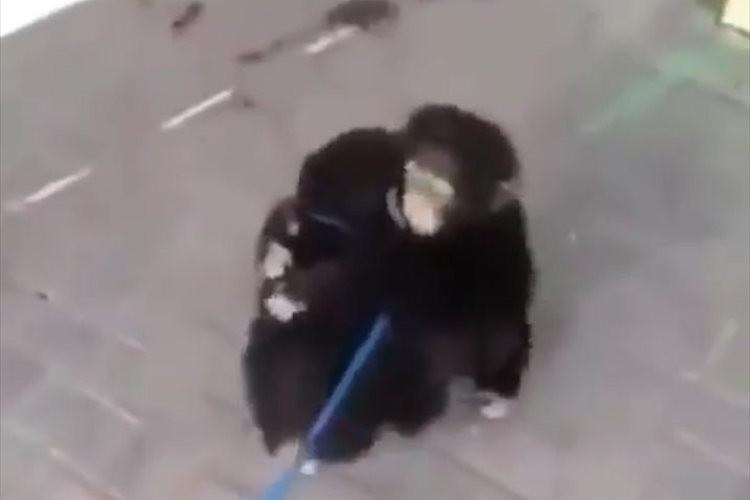 兄弟のように過ごしていたチンパンジーの赤ちゃん…再会した時のハグにグッとくる