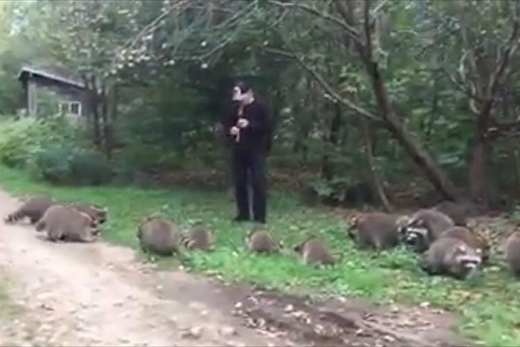 笛を吹くと、どこからともなくアライグマが集まってきた!童話のようなシーンが話題に