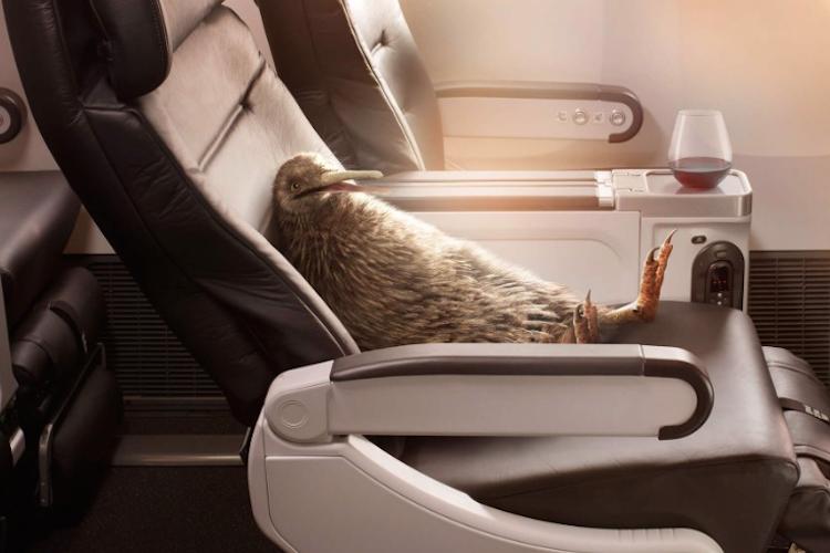 国鳥がめっちゃくつろいでる!NZ航空のキャラクター「ピートくん」が楽しそうで可愛いと話題に