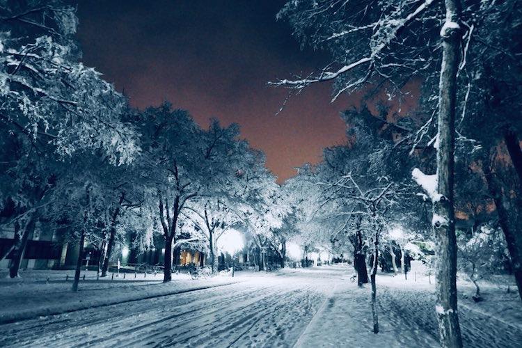 え?ここが大学?北海道大学札幌キャンパス内の雪景色が幻想的でめっちゃきれい!