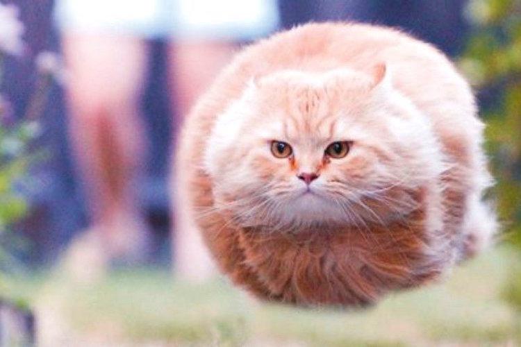 ネットで話題の浮遊する猫をフィギュア化!その完成度の高さにビックリ!