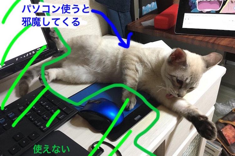 """もっと構ってにゃ〜!PCを使うと邪魔してくるニャンコに""""猫よけ""""を敷いてみたら…"""