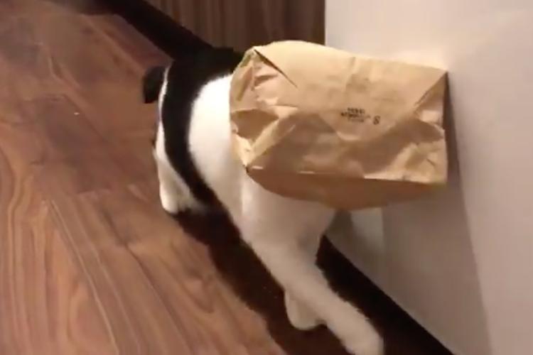 ネコがVRを体験中?紙袋を被るのが大好きなネコちゃんがめっちゃカワイイ