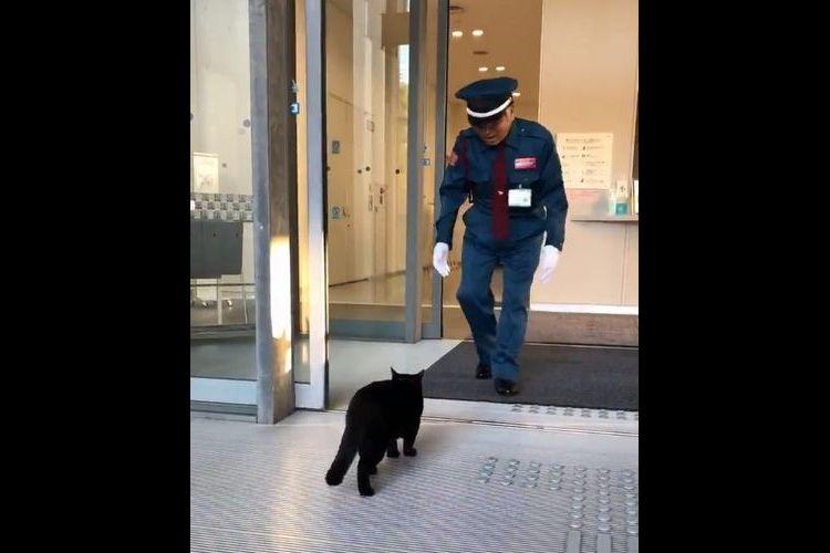 【動画】入られんよ。警備員さんに入口を防がれた黒猫、この後にとった行動が超カワイイ