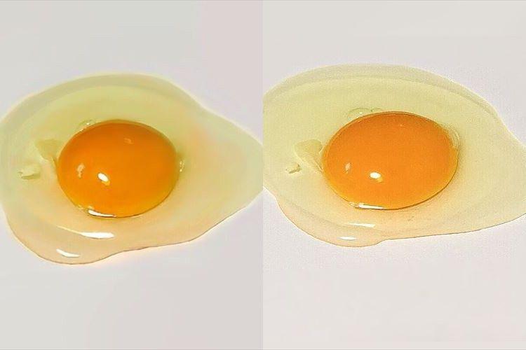 「描いた卵と紙に置いた卵」みなさんどちらが絵か分かりますか?