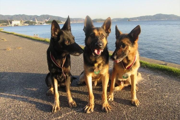 「誇らしげな表情が素敵」西日本豪雨で活躍した3匹の警備犬が褒章状を授与