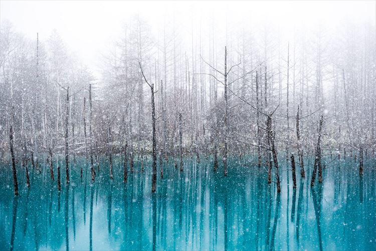 「この情景を一生忘れない」北海道美瑛町の『青い池』と大雪のコラボが幻想的で美しい
