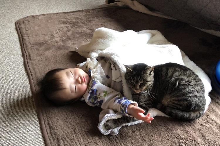 だって赤ちゃんってあったかいもんね。寝ている赤ちゃんで暖をとる猫たちの風景