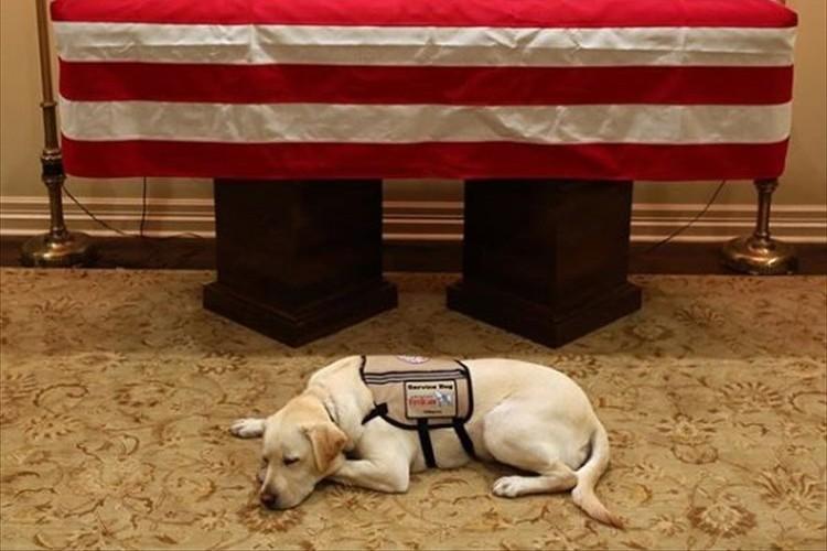 永遠の別れを悟ったのだろうか…ブッシュ元大統領の棺の前で横たわる介助犬の姿が切ない