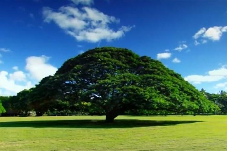 「この木なんの木♪」のテレビCMでお馴染みの「日立の樹」に、日立は毎年4,500万円払っていた